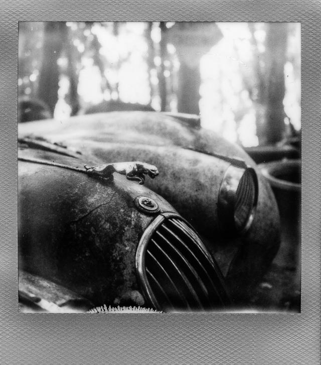 Autolegenden im Wald 7